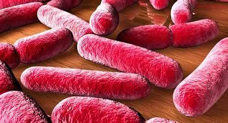 magen darm grippe blut im stuhl stuhluntersuchung auf bakterien salmonellen und co