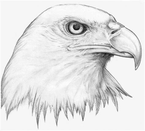 Cool Drawings Of Animals Drawings Of Animals Twenty Hueandi Co Drawings Inspiration Animal Pictures For To Draw