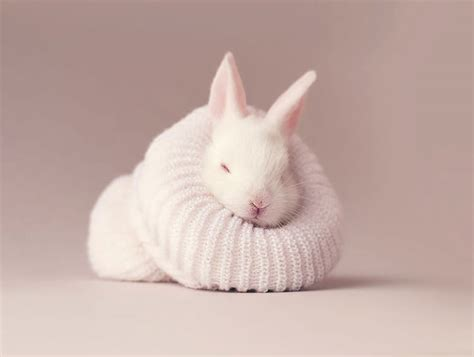 best bunny photographer gives his newborn pet bunny the cutest
