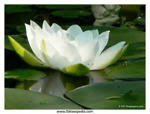 Lotus Flower Meaning Radiohead Lotus Flower Meaning Images