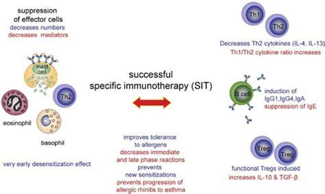 mechanisms of allergen specific immunotherapy allergen specific immunotherapy sit is associated with