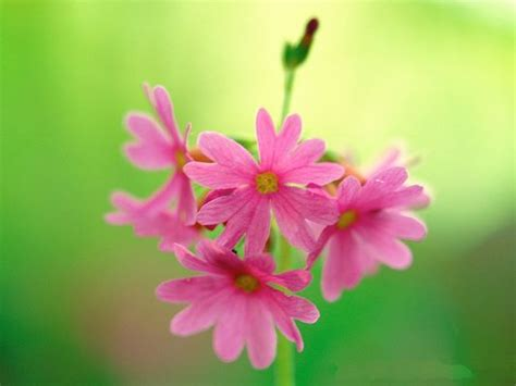 green wallpaper with pink flowers fine art landscape photography pink blooming flowers and