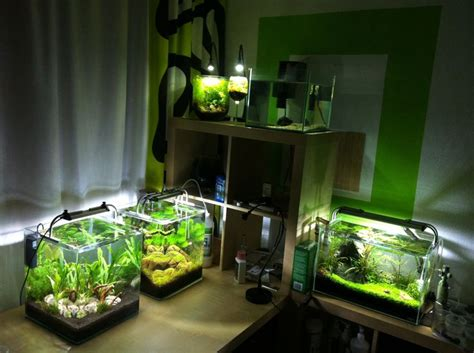 small aquarium aquascape aqua ecke planted tank aquascaping biconeo aquascaping pinterest my childhood