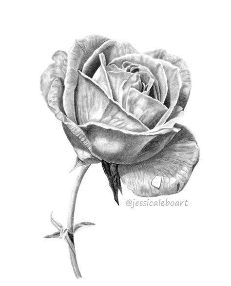 Graphite Drawings Jessica Lebo Art