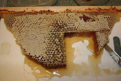 harvesting honey from top bar hive honey harvest and processing from top bar hives top bar hive tops and bar