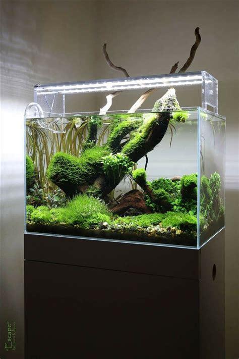 Aquascape Aquarium by 13394 Best Aquascape Images On Fish Tanks