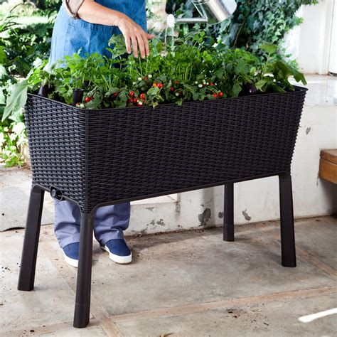 Keter Planter Box by Keter Elevated Garden Bed Raised Bed Container