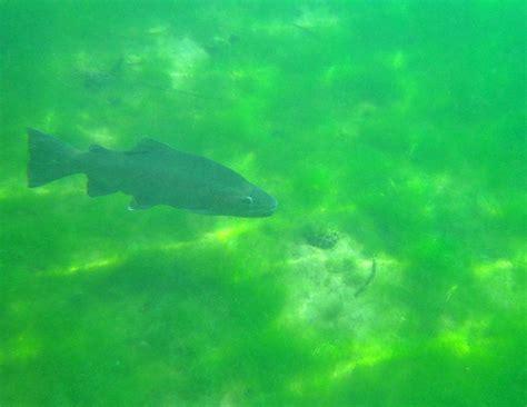 acqua santa fiora santa fiora un immersione inusuale forum natura