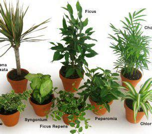 guide to common house plants plants that fight indoor pollutants gardening tips