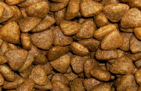 aafco food aafco accepts revised and cat nutrient profiles 2015 09 01 petfoodindustry