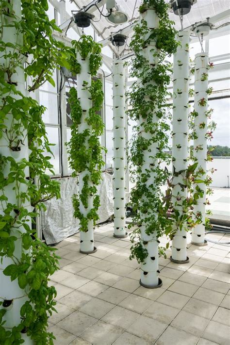 Vertical Garden Hydroponics Best 25 Vertical Farming Ideas On Vertical