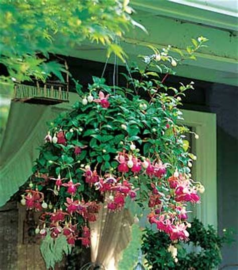 all about gardening and nature hanging baskets for