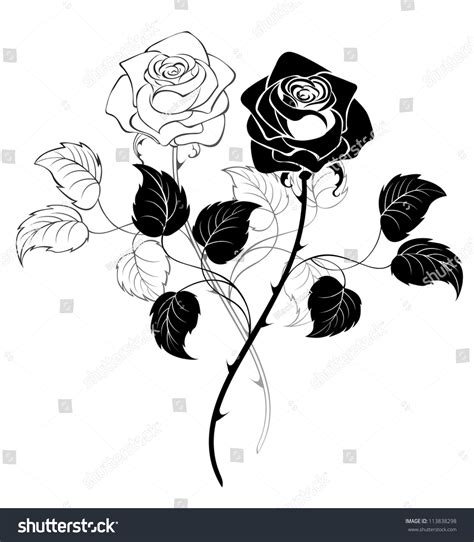 two artistically drawn black roses on a white background