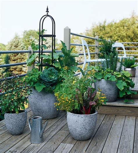 Fresh Ideas For Growing Vegetables In Containers Container Gardens Vegetables