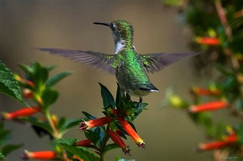 how to attract butterflies and hummingbirds to your garden