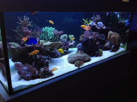 Aquarium Central Filter Dolphin Excellent 78 best images about reef aquarium on rubber grommets tropical fish store and