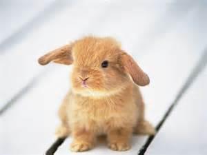mischief monkeys ruffus cutest bunny