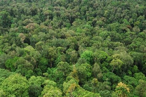 plants found in tropical evergreen forest why are the equatorial forest considered to be