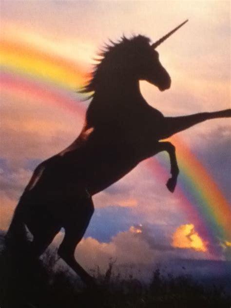 imagenes sobre unicornios m 225 s de 25 ideas incre 237 bles sobre unicornios en pinterest
