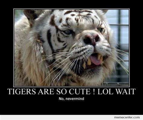 Tiger Memes - tigers are cute by ben meme center