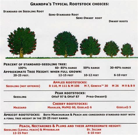 fruit tree spacing chart use this chart to help plan what rootstock will be best