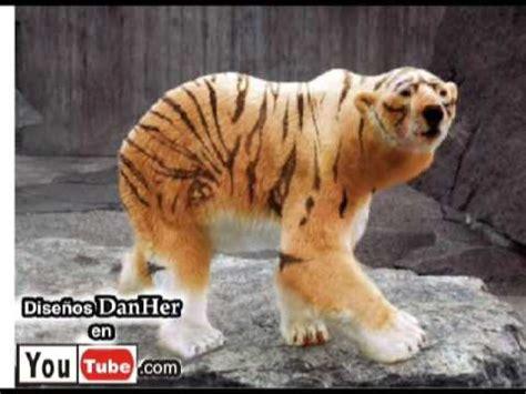 imagenes de animales transgenicos animales clonados por danher animales muy raros falsos