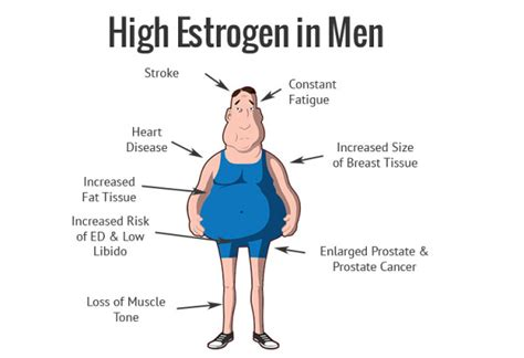estradiol feminize effects in men men how to naturally lower your estrogen levels more