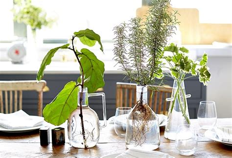 plantas en agua interior cultivando plantas en agua
