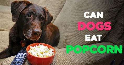 popcorn for dogs can dogs eat popcorn is popcorn bad for dogs to eat before bed