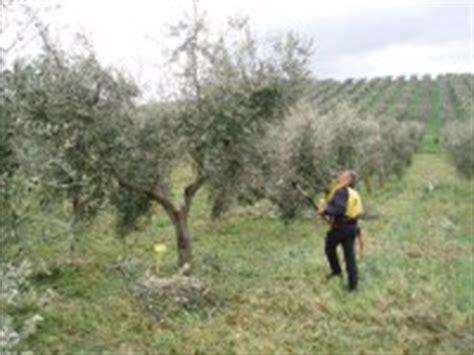 potatura olivo vaso policonico elenco degli operatori abilitati alla potatura dell olivo