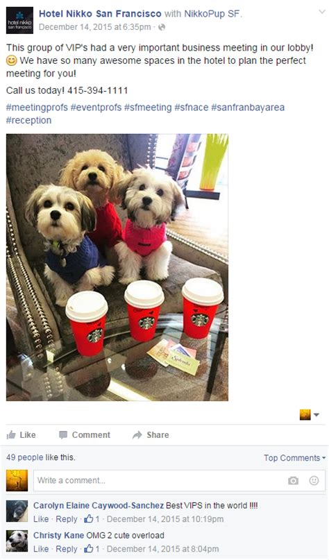 puppy socials san francisco creative social media hits the jackpot viral marketing news