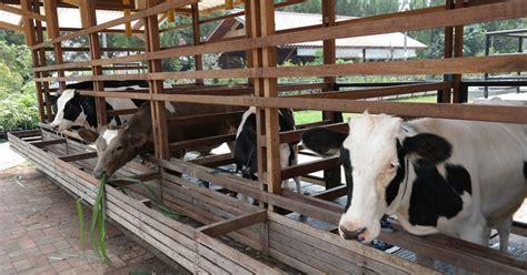 Ilmu Ternak Perah Daerah Tropis panduan umum ternak sapi perah alam tani