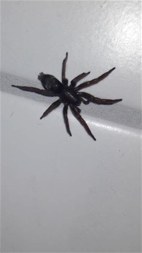 spinnen wohnung kleine schwarze spinnen in der wohnung gef 228 hrlich