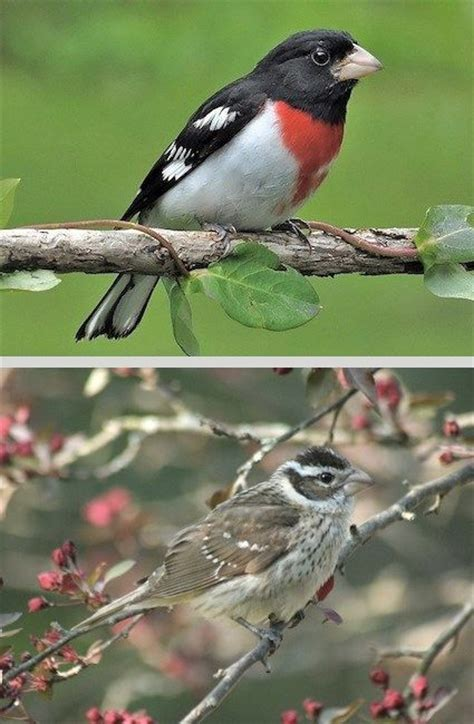82 best images about birds of arkansas on pinterest