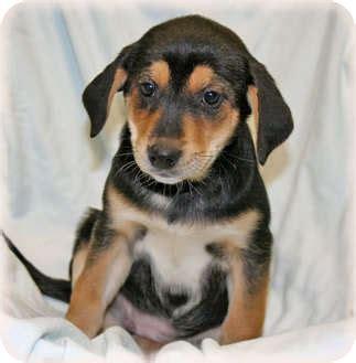 basset hound pug mix puppies image gallery hound mix puppies