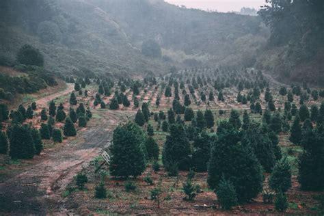 start christmas tree farm 10 tips to start a tree farm to make money pt money