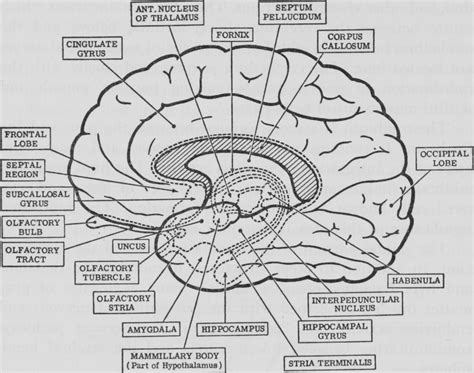 gross anatomy coloring book important questions of neuroanatomy for 2nd