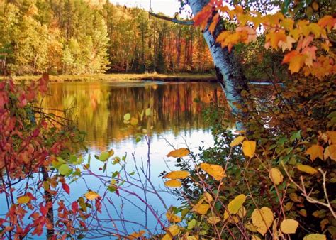 mn dnr fall colors northern minnesota fall colors near peak brilliance