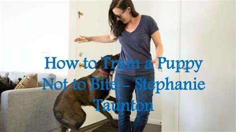 how to teach a not to bite how to a puppy not to bite taunton