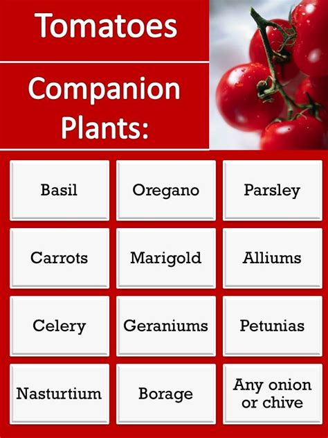Plants That Repel Aphids by Gardening With Red Hill Companion Plants For Tomatoes