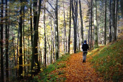 A 12 Mile Walk In The Woods by B P A By In Gatesheadbook Review A