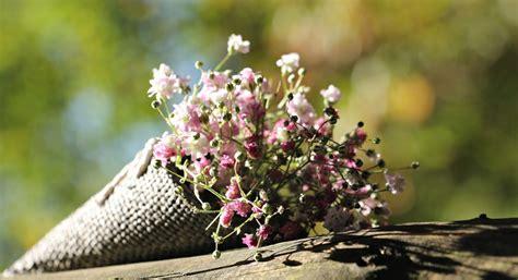 fiori nascita fiori per una nascita il regalo perfetto per una neo