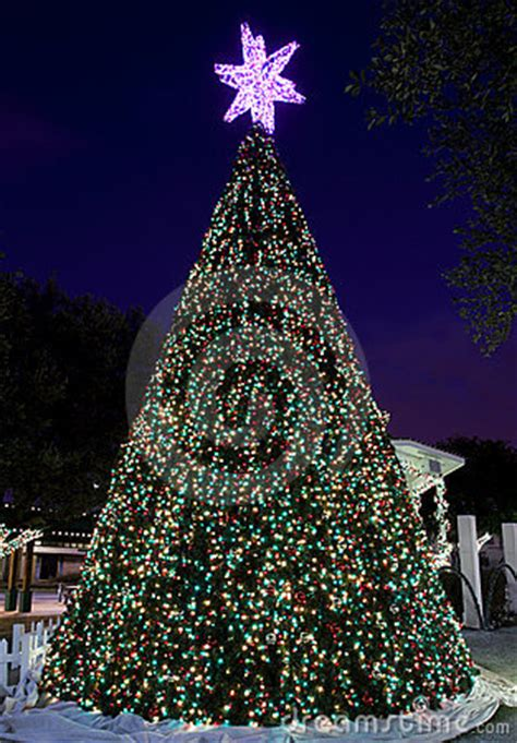 city halls outdoor christmas tree royalty  stock images image