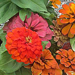 fall flowers your sunday best fall flowers before you write lou