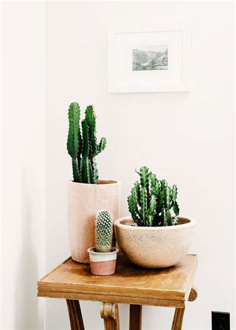 cactus home decor 20 simple cactus ideas for beautify your room home