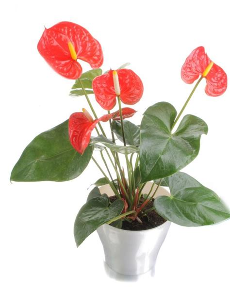 common house plant common house plants hgtv