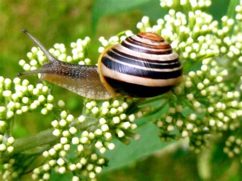 How Do Garden Snails Live by Top 10 Slowest Animals In The World The Mysterious World
