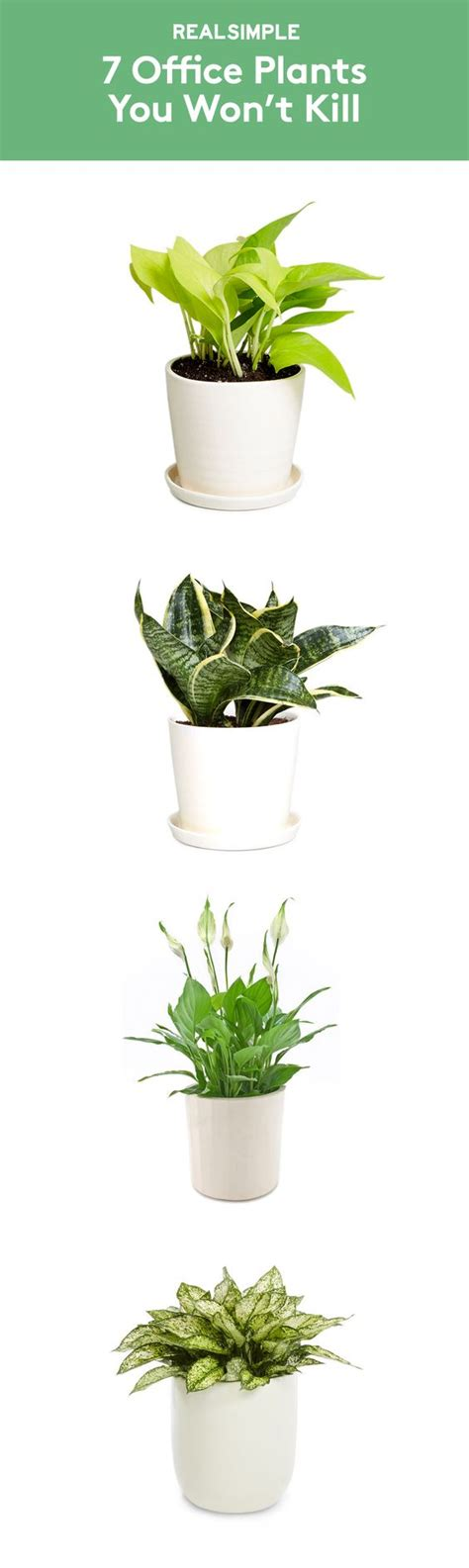 7 office plants you won t kill kantoren planten en
