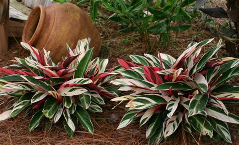 foliage plant business directory products articles companies