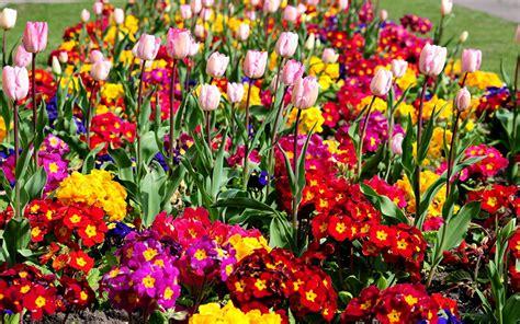 imagenes a flores fondos de pantalla muchas flores descargar imagenes
